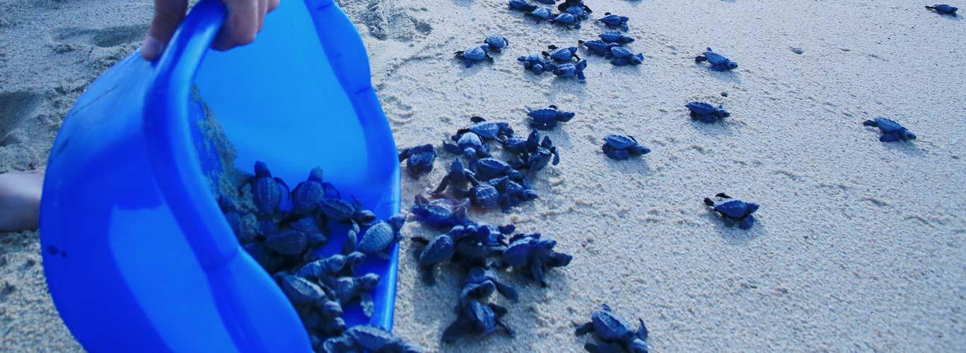 preserve healthy oceans